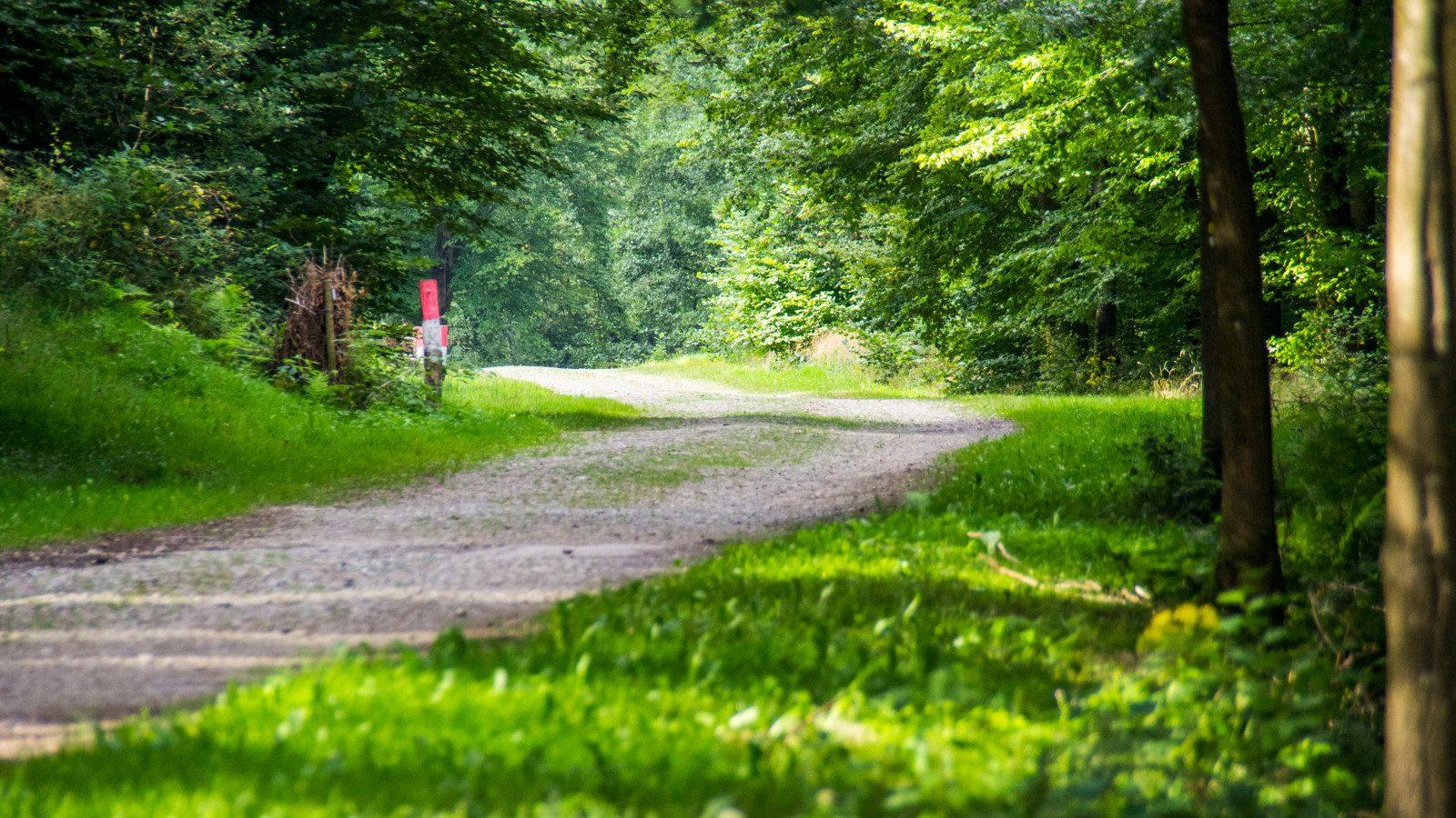 Chemin du Domaine provincial de Mirwart - Johan Barrot